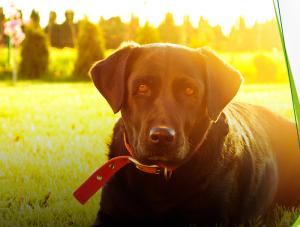 Cães e gatos podem desenvolver câncer de pele