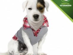 Cuidados com seu cão no inverno