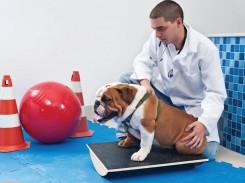 O reconhecimento do serviço do veterinário perante a visão dos tutores
