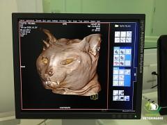 Reconstitui em 3D e em cores os órgãos examinados.